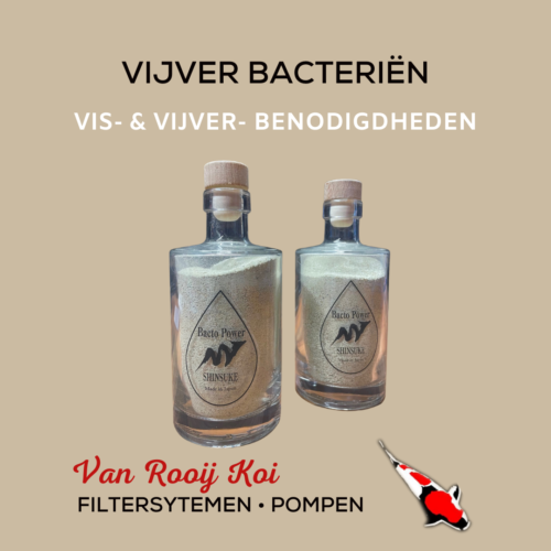 Vijverbacterie